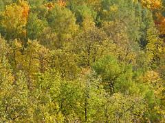 Autumn through my window (janepesle) Tags: autumn fall nature moscow forest tree осень москва пейзаж landscape