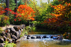Autumn moments (LotusMoon Photography) Tags: landscape autumn usa illinois rockford water andersongarden andersonjapanesegarden japanesegarden waterfall nature brown green red rocks tree trees pool bridge reflection beauty beautiful color colour