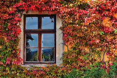 Bunt (r.wacknitz) Tags: ballenstedt hdr harz fall foliage window colour nikond3400 nikkor nikcollection