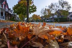 Scenes From The Gutter (Clayton Perry Photoworks) Tags: vancouver bc canada fall autumn explorebc explorecanada leaves trees winwinchickn food steveston richmond