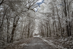 Rocheport Road Infrared (Notley Hawkins) Tags: httpwwwnotleyhawkinscom notleyhawkinsphotography notley notleyhawkins 10thavenue road dirtroad rocheportroad boonvillemissouri missouri coopercountymissouri trees foliage greenery tree canopy forest woods sky clouds 2018 september landscape outdoors wood ir infrared