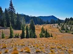tl1110238Alpinemeadows (thom52) Tags: central oregon bendor todd lake conc thom sparks hiking broken top fall