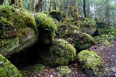 20181015-03-Three Capes Track day 4 - Mossy rocks (Roger T Wong) Tags: 2018 australia mtfortescue np nationalpark rogertwong sel24105g sony24105 sonya7iii sonyalpha7iii sonyfe24105mmf4goss sonyilce7m3 tasmannationalpark tasmanpeninsula tasmania threecapestrack bushwalk cloudforest green hike lichen mist moss outdoors tramp trek walk