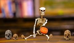 Spook-Tacular (ΨᗩSᗰIᘉᗴ HᗴᘉS +27 000 000 thx) Tags: spooktacular spook halloween spooky squelette skeleton smileonsaturday hensyasmine namur belgium europa aaa namuroise look photo friends be wow yasminehens interest intersting eu fr greatphotographers lanamuroise fuji fujifilmgfx50s fujifilm fake flickrfriday