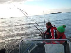 09256066 (Angelreisen Hamburg) Tags: angelreisen angelurlaub angeln norwegen mittenursalzwasser hitratrondheim