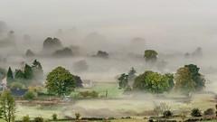 Curbar Mists #3 (gavsidey) Tags: curbar mist valley derbyshire ngc d500 trees walls green edge