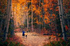Adventures (miss.interpretations) Tags: woods trees children aspens colorado serendipity fall autumn canon rachelbrokawphotography