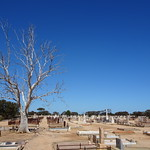 Kadina. Cemetery for people and trees. thumbnail