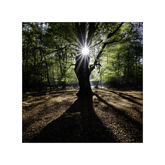 Beech Sunburst. (muddlemaker1967) Tags: hampshire landscape photography thenewforest national park beech trees fallen leaves sunburst shadows bracken fujifilm xt1 carlzeiss touit 12mm f28 lens