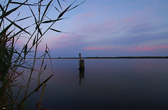 Detras de las cañas (candi...) Tags: río deltadelebro ebro riumar cañas tronco agua paisaje arboles cielo nubes atardecer sonya77 naturaleza nature airelibre