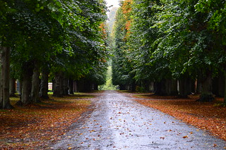 L'automne est le printemps de l'hiver - Henri de Toulouse Lautrec