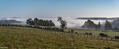 25092018-DSC_0182-Panorama (vidjanma) Tags: ardenne matin brume panorama