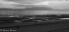 Beach (RCB4J) Tags: ayrshire clydecoast firthofclyde irvinebeach jakob rcb4j ronniebarron scotland sonyslta77v sonydt18250mmf3563 art babygrace dobermanterrier dogwalking morningwalk photography rehomed rescued siameselurcher trailhound blackandwhite bw monochrome