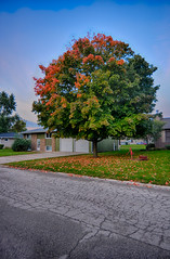 Autumnal Beginnings (kendoman26) Tags: hdr nikhdrefexpro2 autumn autumncolors fall fallcolor nikon nikond7100 tokinaatx1228prodx tokina tokina1228 morrisillinois