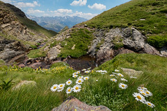 Bright White and Yellow daises grow in the lush green grass of the Pyrenees mountains - Christine Phillips (Christine's Phillips (Christine's observations) - ) Tags: pyrenees mountain climb hike christinephillips bluesky whiteclouds perfect lush nature outdoor happiness freedom