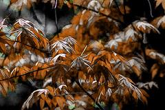 Hojarasca (seguicollar) Tags: imagencreativa photomanipulación art arte artecreativo artedigital virginiaseguí árbol arce marrón otoño ramas hojas leaf leaves topaz texturas