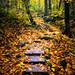 Le chemin sacré secret/The secret sacred stair/Den hemliga heliga trappan