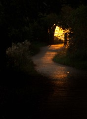 Dawn Path (Julian Barker) Tags: attenborough nottingham nature reserve nottinghamshire september 2018 gold golden light sunrise dawn highlight highlighted area shadows east midlands england uk great britain julian barker canon dslr 5d mkii