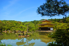 (Hannah Murphy Photography) Tags: japan japanese kyoto kinkaku kinkakuji temple lake trees water flora gold golden