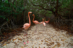 . (ferand) Tags: flamingos