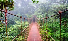 The World's 7 Most Amazing Forests (katalaynet) Tags: follow happy me fun photooftheday beautiful love friends