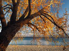 The golden October at the Baltic Sea (Ostseeleuchte) Tags: goldeneroktober goldenoctober balticsea ostsee sierksdorf goldenleaves sunshine octoberlight sonnenschein oktoberlicht bluewater wasser ostseewasser