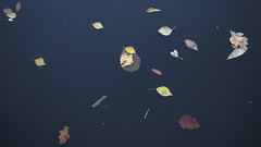 Floating (hasor) Tags: leaves leaf floating river autumn fall water minimalistic sweden