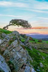 Mark's Muse Tree (timnutt) Tags: xt2 landscape sky hill lakedistrict trees fuji cumbria mountains rural 35mm fujifilm 35f2wr