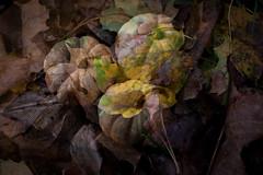Ghostly Pumpkins (lclower19) Tags: doubleexposure incamera pumpkins mini leaves ontheground fall 4252 522018 takeaim