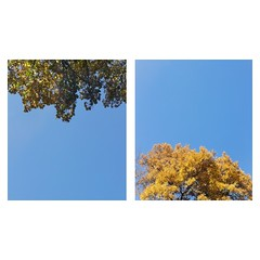 Seasons (Maria Zaharieva) Tags: trees green yellow blue bluesky sky phone phonephoto phonephotos phonephotography collage skyscape nature autumn spring seasons colors minimalistic landscape