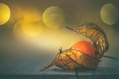 Physalis (Ro Cafe) Tags: crinkled foldedorcreased fruit lensbaby lensbabyedgr80 light mm macro macromondays nikond600 physalis selectivefocus wrinkled blur bokeh food macroconverter