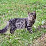 P#gatoelusa P#gatos #gatoscallejeros #cats #photocats #instacats #neko #meow #gatze #gatto #koshka #catsofworld #catsofinstagram #streetcats #chat #gatosdeinstagram #gatosdecolonia #barcelonagatigos thumbnail