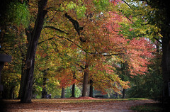 Fall color in the park (Violet aka vbd) Tags: pentax k1ii k1markii hdpentaxda55300mmf4563edplmwrre germany park fallcolor autumn 2018 fall2018 handheld trees leaves manualexposure badhomburgvorderhöhe foliage