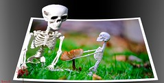 ⒽᗩPPY  ⒽᗩLLOWᗴᗴᘉ - 6118 (ΨᗩSᗰIᘉᗴ HᗴᘉS +27 000 000 thx) Tags: halloween skeleton squelette outofframe outthebounds fuji fujifilmgfx50s fujifilm fungus mushroom fun hensyasmine namur belgium europa aaa namuroise look photo friends be wow yasminehens interest intersting eu fr greatphotographers lanamuroise