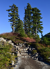 Artist Ridge Trail - Mt. Baker-Snoqualmie National Forest (SonjaPetersonPh♡tography) Tags: mtbaker mountains mountainlandscape mountbaker artistridgetrail artistridge washington washingtonstate stateofwashington nikon nikond5300 snoqualmienationalforest mtbakersnoqualmienationalforest trail hiking hikingtrails scenic scenery landscape whatcomcounty valley overlook rock pacificnorthwest pnw trees vegetation