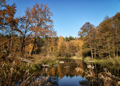 7_1 (KRR_3) Tags: sony a6000 nex selp18105g tree trees forest poznan poznań malta autumn lake pond