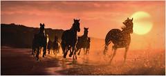 """Sunset Stampede"" (martinshore) Tags: stallion black spray sand beach sunset stampede horse horses"