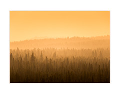 Golden Forest (andreassofus) Tags: forest woods inthewoods trees sunset evening light sunlight sun golden goldenhour landscape nature grandlandscape america usa oregon travel travelphotography outdoor horizon nopeople fineart fineartphotography pattern lines shadows abstract haze mist misty fog foggy summer summertime pinewood pine pines pinetrees
