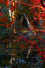 2018 - 4.10.18 Enchanted Forest (10) (marie137) Tags: forest lights trees show marie137 bright colourful pitlochry treeman attraction visit entertainment music outdoors sculptures wicker food drink family people water animation