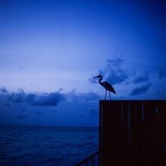 Image 7 (jacky4j) Tags: rollei rolleicordiv fujifilm velvia 50 epson v800 maldives