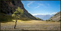 Solitaire ! (watbled05) Tags: arbres branche ciel champ extérieur feuilles hautesalpes herbe massifdesecrins montagne paysage rochers