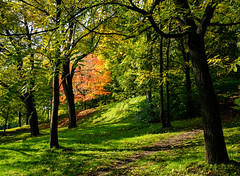 First One to Turn (Kurt Kramer) Tags: montreal montroyal autumn fall fallcolor trail red redleaves green forest shadows sunlight isolated distance highlighted quebec nature