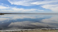 Alviso Sky (tourtrophy) Tags: alviso southbay alvisomarinacountypark stilts birds googlepixel2xl androidphotography