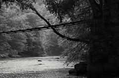 Little Toby Creek, Ridgway PA (michaelstafford5) Tags: littletobycreek ridgwaypa ridgway swingingbridge ropebridge bridge blackandwhite landscape creek pasgl pentax tamronadaptall tamronsp60300macro tamronsp60300 tamron23a k5iis