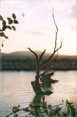 * (PattyK.) Tags: snapseed ioannina giannena giannina epirus ipiros balkans hellas ellada greece grecia griechenland october autumn 2018 ιωάννινα γιάννενα γιάννινα ήπειροσ ελλάδα βαλκάνια οκτώβριοσ φθινόπωρο lake pamvotida lakepamvotida ioanninalake lakeside lakefront waterfront bythelake nature nikond3100 λίμνη παμβώτιδα λίμνηπαμβώτιδα λίμνηιωαννίνων παραλίμνιο μώλοσ δίπλαστηλίμνη νερό φύση