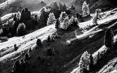 In the Light... (Ody on the mount) Tags: abendlicht anlässe bäume dolomiten em5ii fototour gegenlicht grödnerjoch hang italien kontrast licht mzuiko40150 omd olympus pflanzen südtirol urlaub bw light monochrome sw trees corvara bozen it