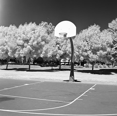 Nielson Park - Infrared (Wayne-K) Tags: bw california film forgottheirfilter hasselblad hasselblad500cm hasselblad80mmf28carlzeisscftplanarlens infrared nielsonpark pleasanton rollei rolleiir400