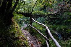 Along The Trail (tyrellblack87) Tags: forest nature trees leaves bridge adventure travel explore colour vibrant light fujifilm fuji fujix100t ireland northernireland