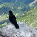 Bird in mountains