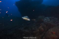 IMG_1339 (davide.clementelli) Tags: diving dive dives padi immersione immersioni ampportofino portofino liguria friends amici underwater underwaterlife sottacqua